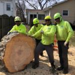 arborist safety