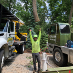 tree service efficiency